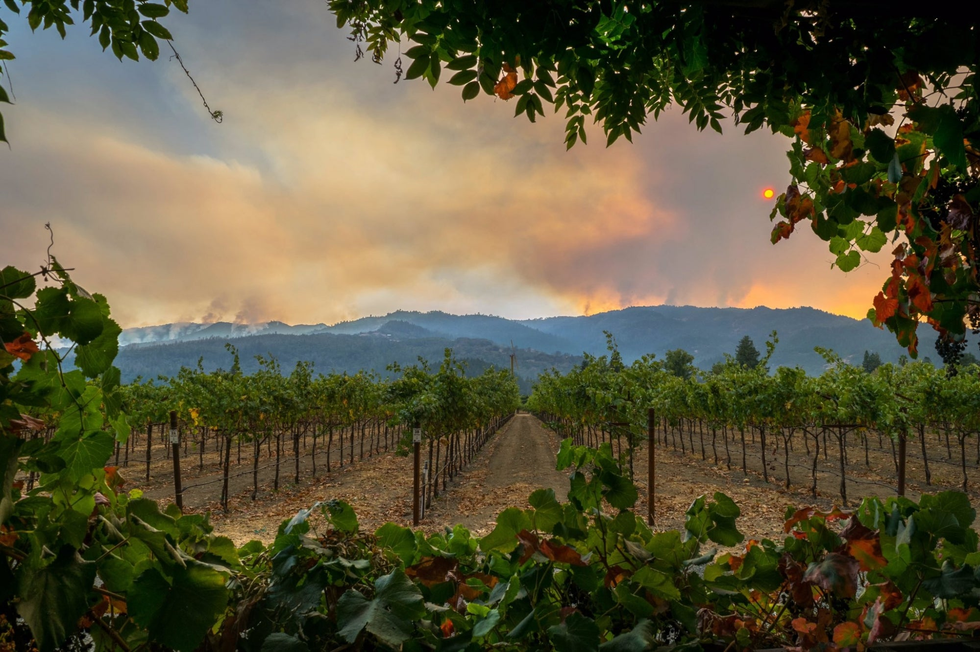 Photo of fire behind hills and vineyard