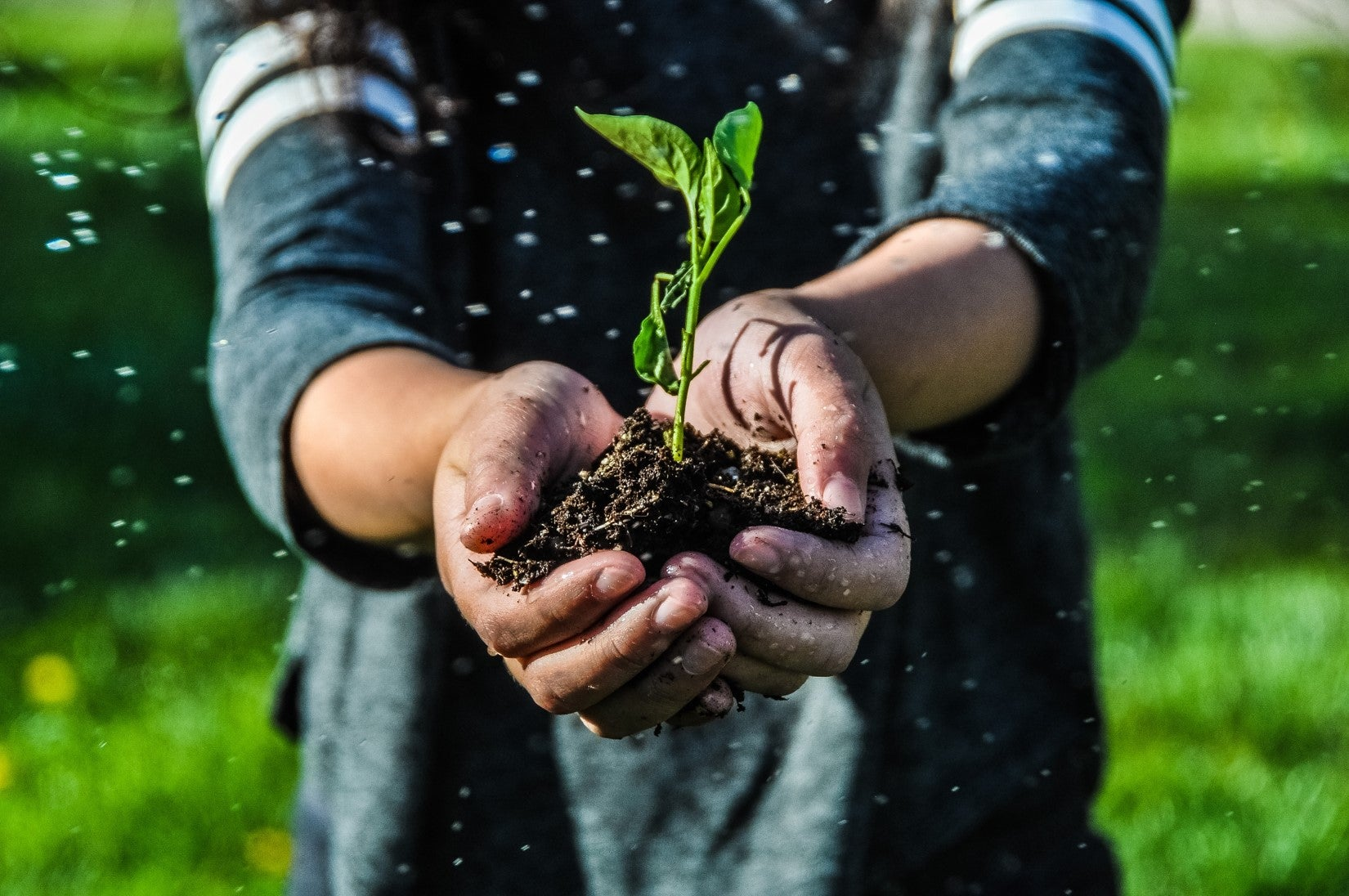 Hands held together in the foreground, holding soil and a sprouted plant