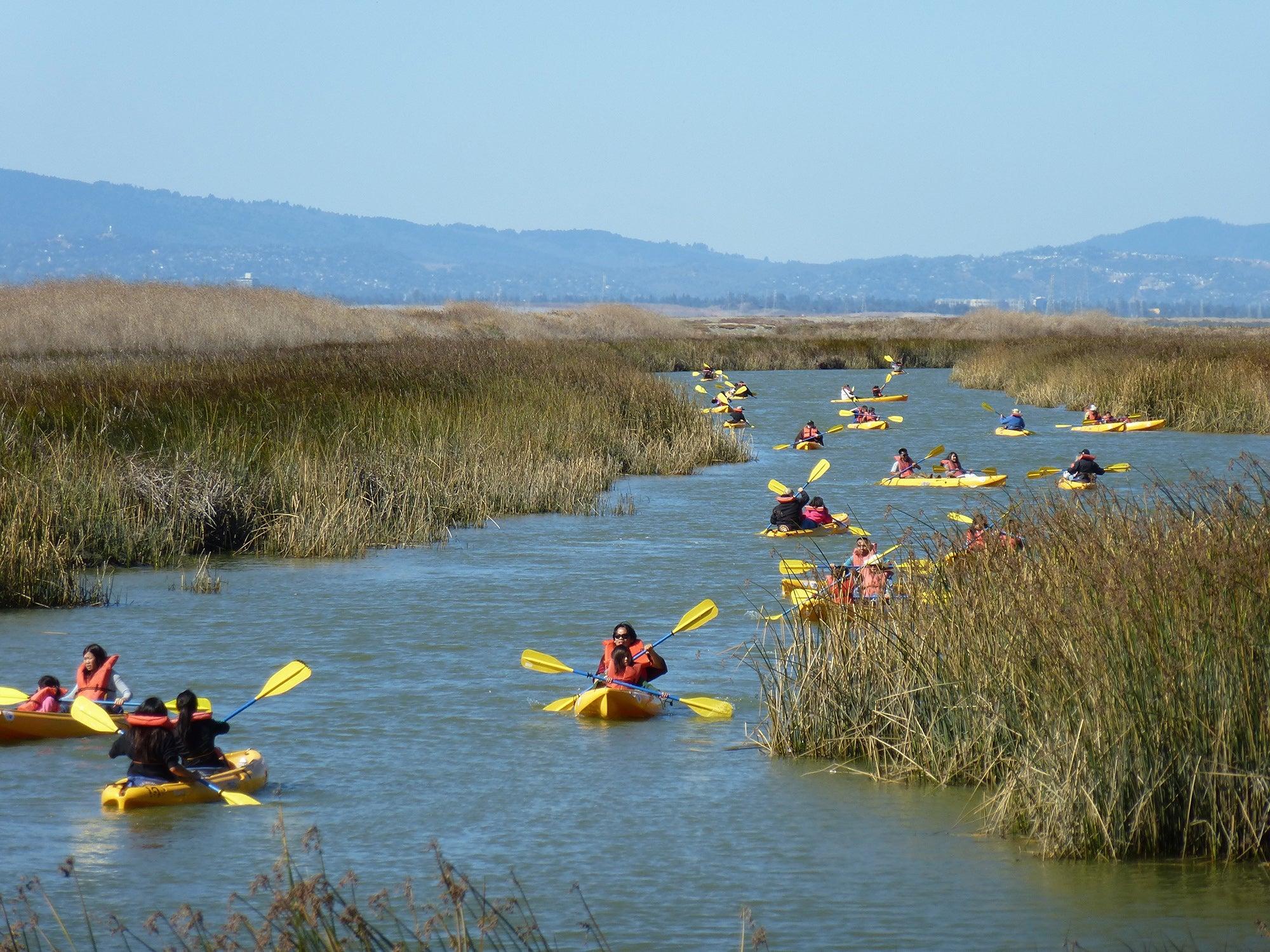 Kayakers in Alviso Slough