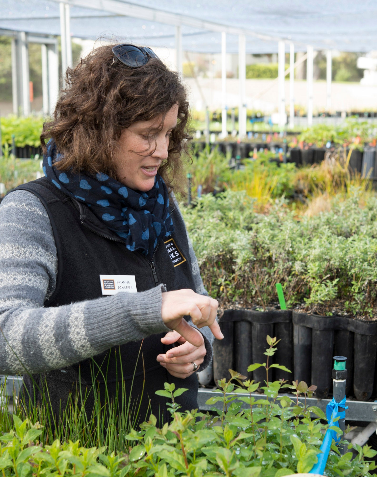 In the greenhouse, Nursery manager Brianna Schaefer points out native species that will be incorporated into the parkway landscape.